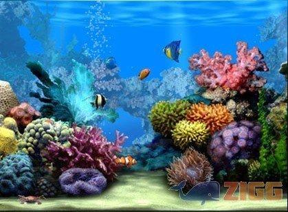 papel de parede marine aquarium